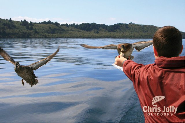 Boy feeding flying ducks on Chris Jolly Outdoors maori carvings taupo cruise