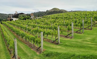 Waiheke Island Vineyards with Tantalus Estate in the background